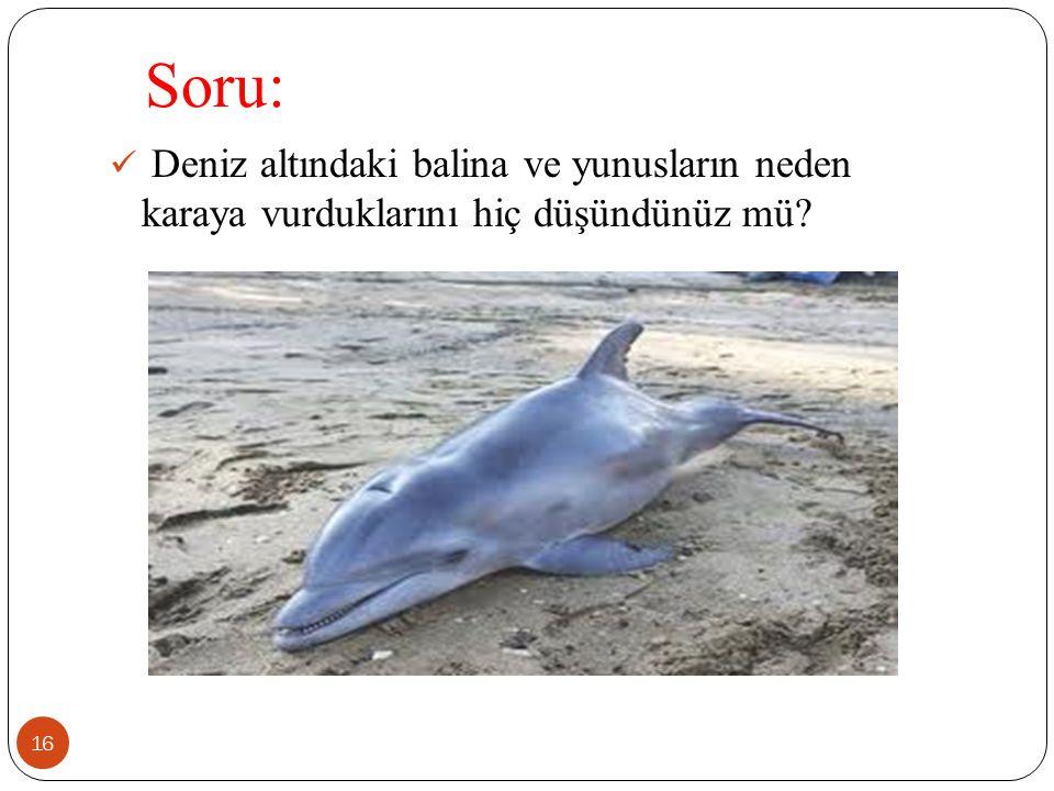 Soru: 16 Deniz altındaki balina ve yunusların neden karaya vurduklarını hiç düşündünüz mü?