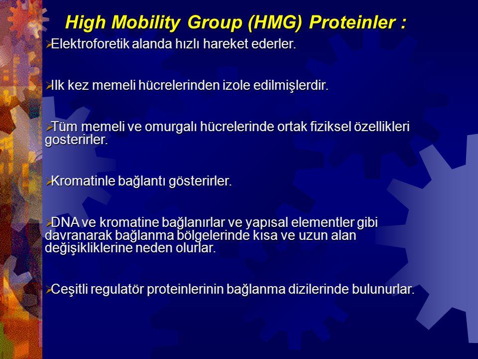 High Mobility Group (HMG) Proteinler :  Elektroforetik alanda hızlı hareket ederler.  Ilk kez memeli hücrelerinden izole edilmişlerdir.  Tüm memeli