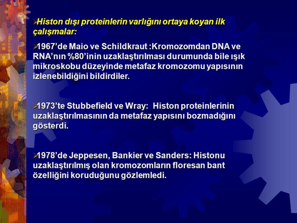  Histon dışı proteinlerin varlığını ortaya koyan ilk çalışmalar:  1967'de Maio ve Schildkraut :Kromozomdan DNA ve RNA'nın %80'inin uzaklaştırılması