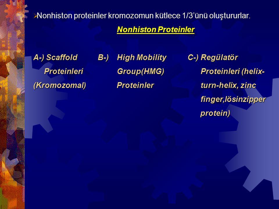  Nonhiston proteinler kromozomun kütlece 1/3'ünü oluştururlar. Nonhiston Proteinler A-) Scaffold B-) High Mobility C-) Regülatör ProteinleriGroup(HMG