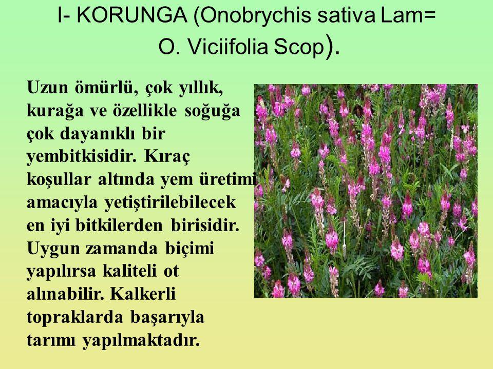 I- KORUNGA (Onobrychis sativa Lam= O. Viciifolia Scop ). Uzun ömürlü, çok yıllık, kurağa ve özellikle soğuğa çok dayanıklı bir yembitkisidir. Kıraç ko