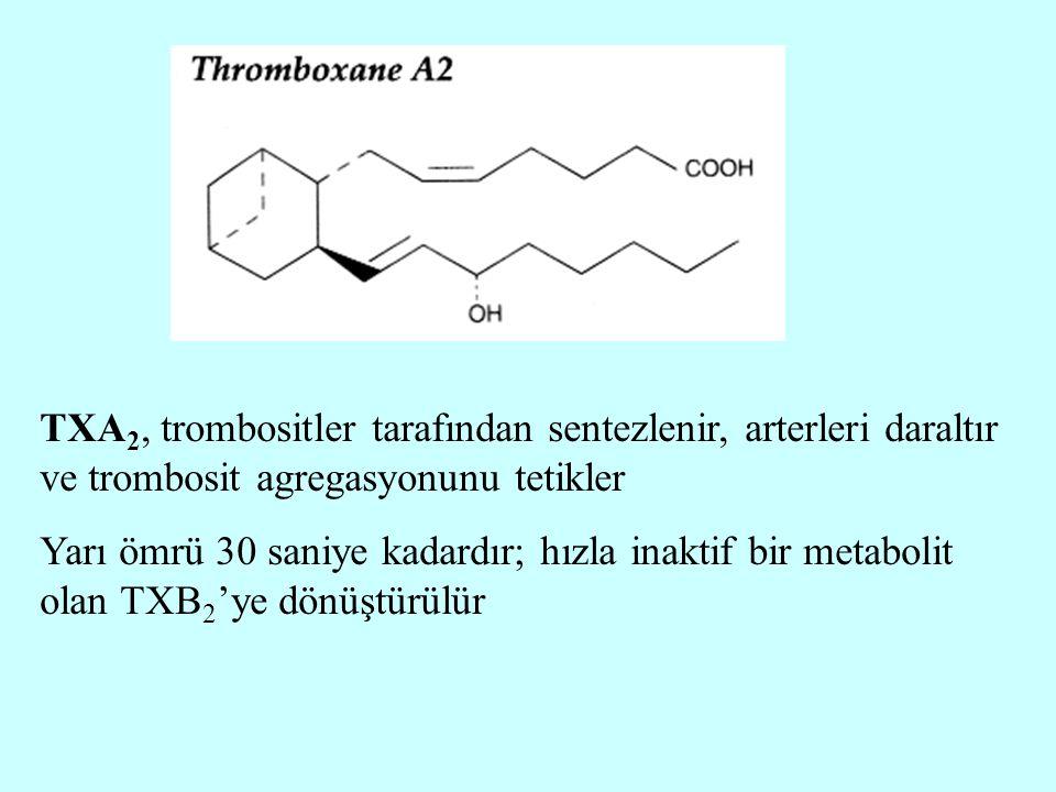 TXA 2, trombositler tarafından sentezlenir, arterleri daraltır ve trombosit agregasyonunu tetikler Yarı ömrü 30 saniye kadardır; hızla inaktif bir met