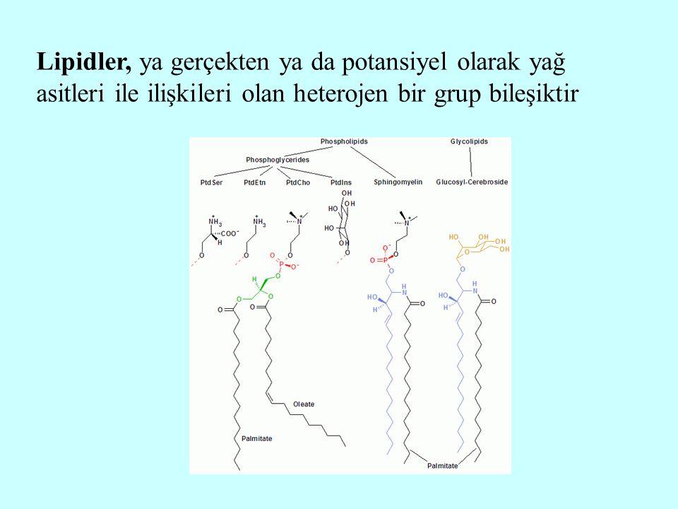 Lipidlerin ortak özellikleri Lipidler, biyolojik kaynaklı organik bileşiklerdir Lipidlerin yapılarında C, H, O bulunur; ayrıca N, P, S gibi elementler de bazı lipidlerin yapısına girerler Lipidlerin temel yapı taşları yağ asitleridir Lipidler, suda çözünmeyen, apolar veya hidrofob bileşiklerdir Lipidler, kloroform, eter, benzen, sıcak alkol, aseton gibi organik çözücülerde çözünebilirler Lipidlerin enerji değerleri yüksektir