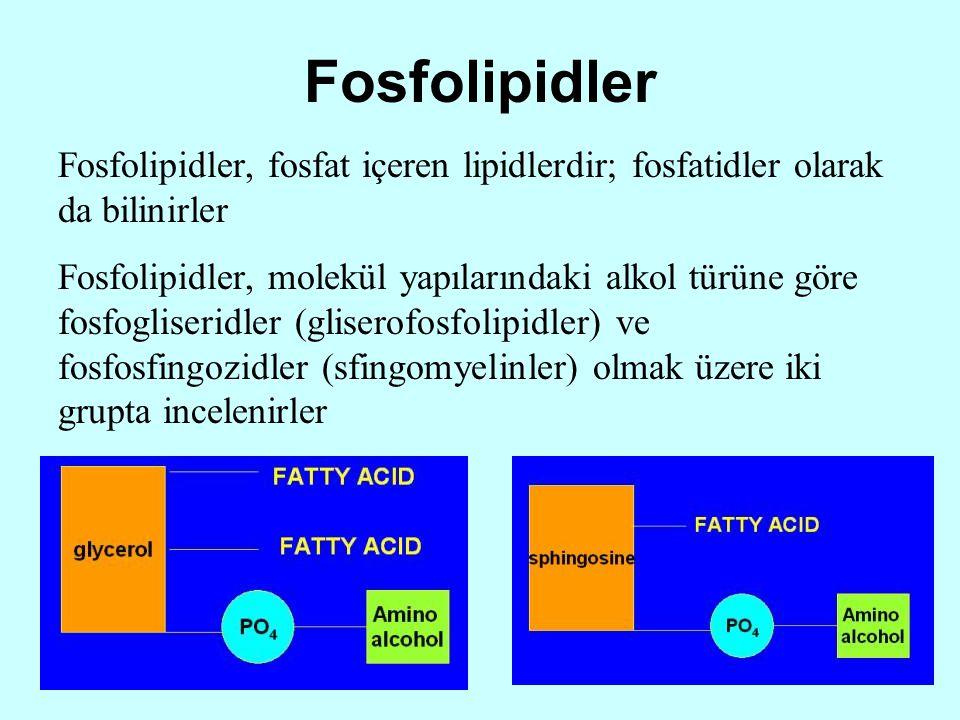 Fosfolipidler Fosfolipidler, fosfat içeren lipidlerdir; fosfatidler olarak da bilinirler Fosfolipidler, molekül yapılarındaki alkol türüne göre fosfog