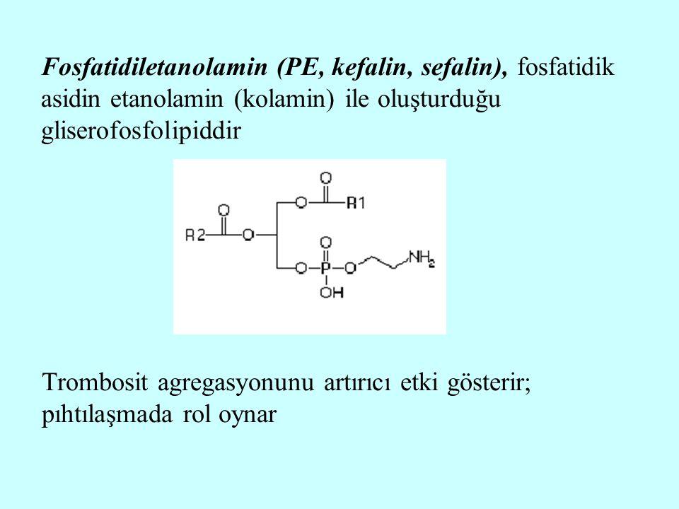 Fosfatidiletanolamin (PE, kefalin, sefalin), fosfatidik asidin etanolamin (kolamin) ile oluşturduğu gliserofosfolipiddir Trombosit agregasyonunu artır