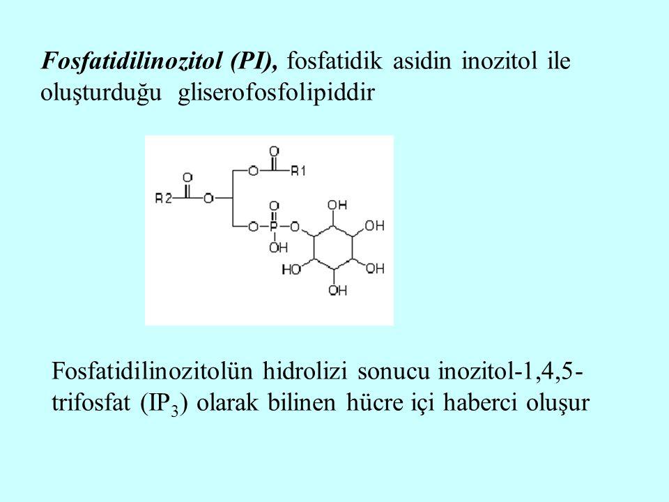 Fosfatidilinozitol (PI), fosfatidik asidin inozitol ile oluşturduğu gliserofosfolipiddir Fosfatidilinozitolün hidrolizi sonucu inozitol-1,4,5- trifosf