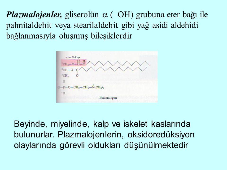 Plazmalojenler, gliserolün  (  OH) grubuna eter bağı ile palmitaldehit veya stearilaldehit gibi yağ asidi aldehidi bağlanmasıyla oluşmuş bileşiklerd
