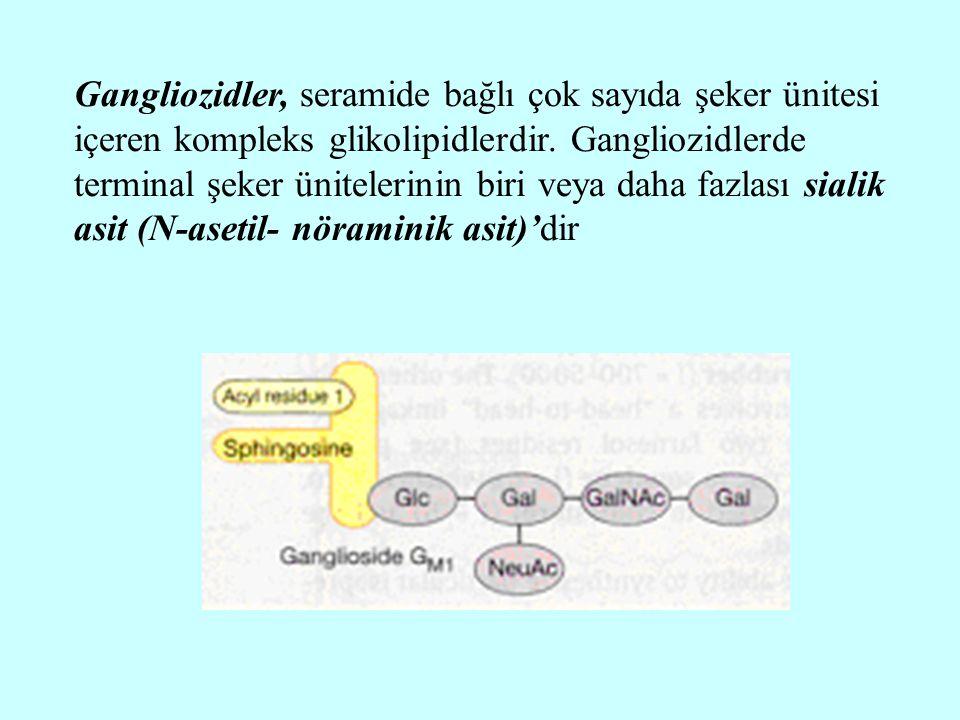 Gangliozidler, seramide bağlı çok sayıda şeker ünitesi içeren kompleks glikolipidlerdir. Gangliozidlerde terminal şeker ünitelerinin biri veya daha fa