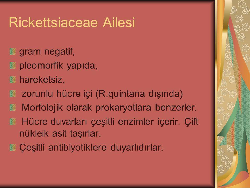 Rickettsiaceae Ailesi gram negatif, pleomorfik yapıda, hareketsiz, zorunlu hücre içi (R.quintana dışında) Morfolojik olarak prokaryotlara benzerler. H