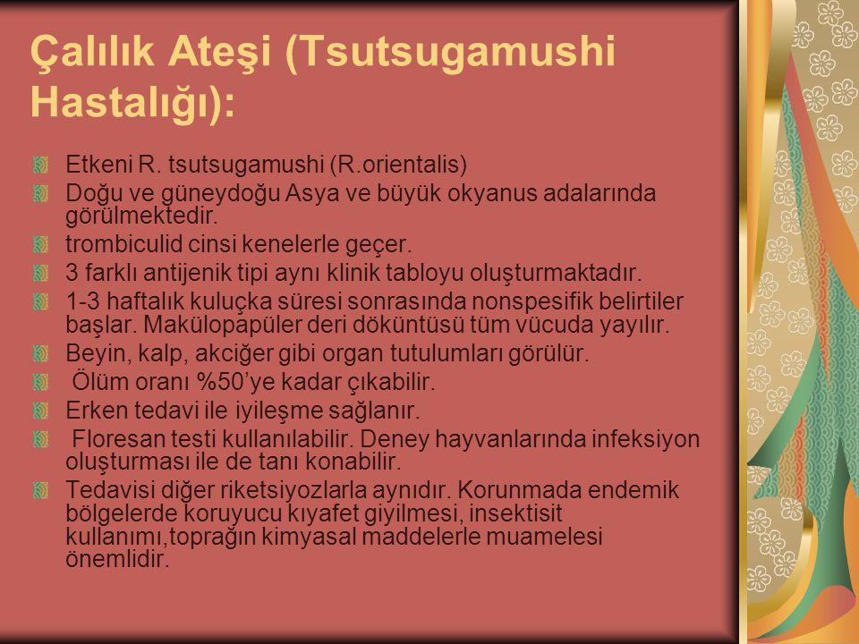 Çalılık Ateşi (Tsutsugamushi Hastalığı): Etkeni R. tsutsugamushi (R.orientalis) Doğu ve güneydoğu Asya ve büyük okyanus adalarında görülmektedir. trom