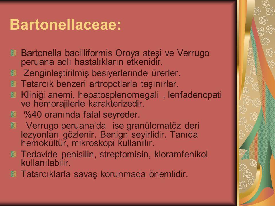Bartonellaceae: Bartonella bacilliformis Oroya ateşi ve Verrugo peruana adlı hastalıkların etkenidir. Zenginleştirilmiş besiyerlerinde ürerler. Tatarc