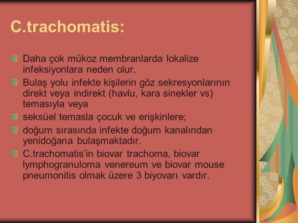 C.trachomatis: Daha çok mükoz membranlarda lokalize infeksiyonlara neden olur. Bulaş yolu infekte kişilerin göz sekresyonlarının direkt veya indirekt