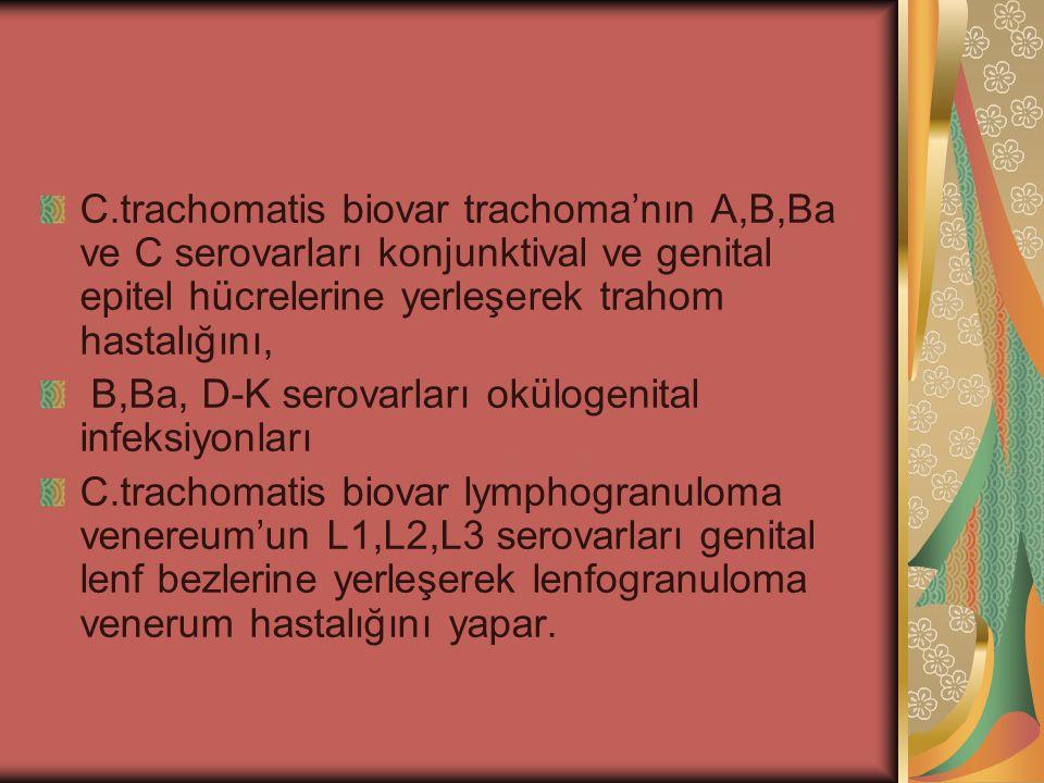 C.trachomatis biovar trachoma'nın A,B,Ba ve C serovarları konjunktival ve genital epitel hücrelerine yerleşerek trahom hastalığını, B,Ba, D-K serovarl