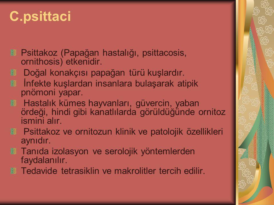 C.psittaci Psittakoz (Papağan hastalığı, psittacosis, ornithosis) etkenidir. Doğal konakçısı papağan türü kuşlardır. İnfekte kuşlardan insanlara bulaş