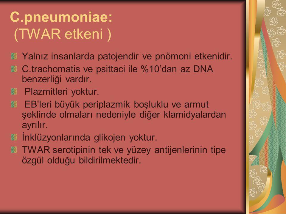 C.pneumoniae: (TWAR etkeni ) Yalnız insanlarda patojendir ve pnömoni etkenidir. C.trachomatis ve psittaci ile %10'dan az DNA benzerliği vardır. Plazmi