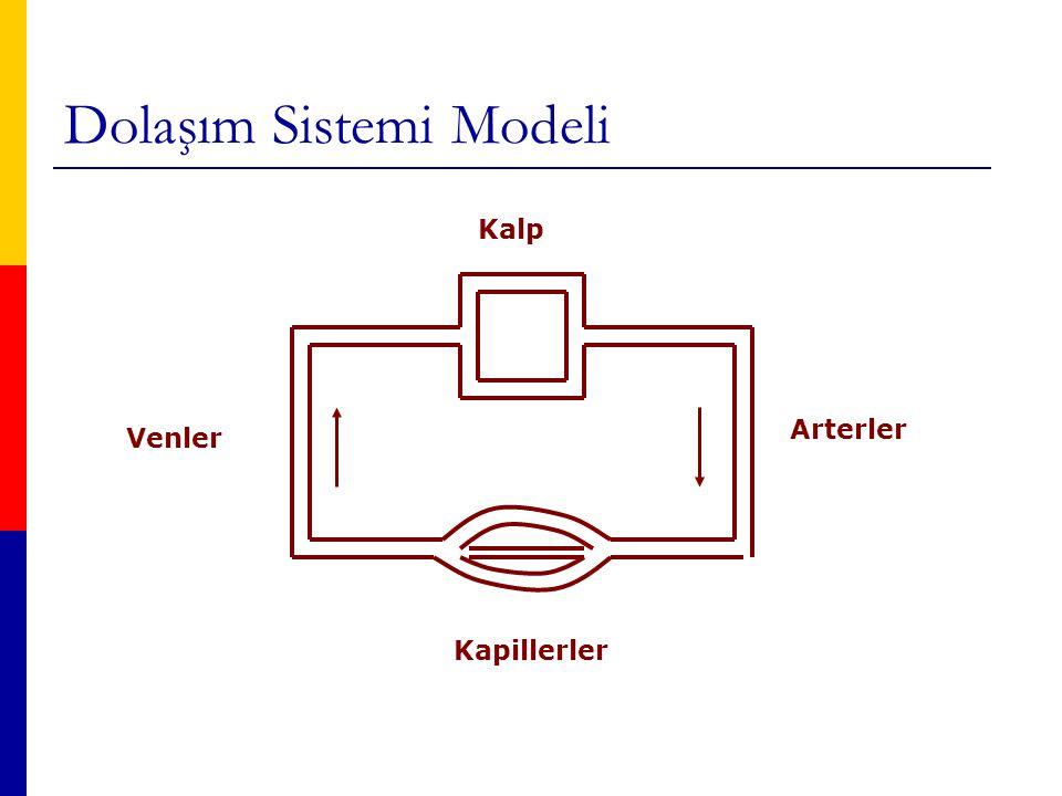 Dolaşım Sistemi Modeli Kalp Arterler Venler Kapillerler