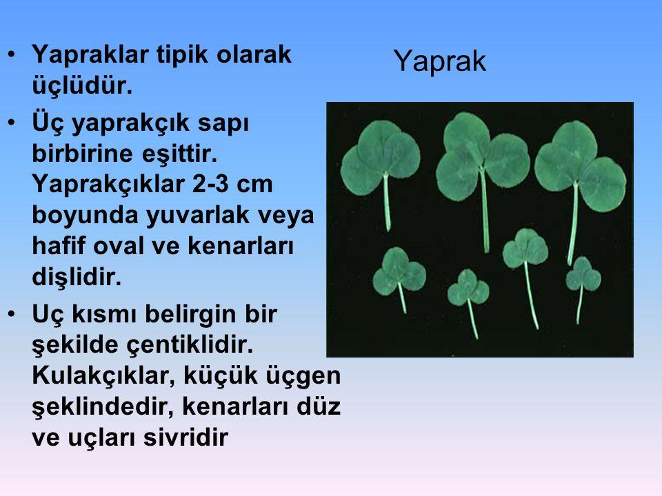 Yaprak Yapraklar tipik olarak üçlüdür. Üç yaprakçık sapı birbirine eşittir. Yaprakçıklar 2-3 cm boyunda yuvarlak veya hafif oval ve kenarları dişlidir
