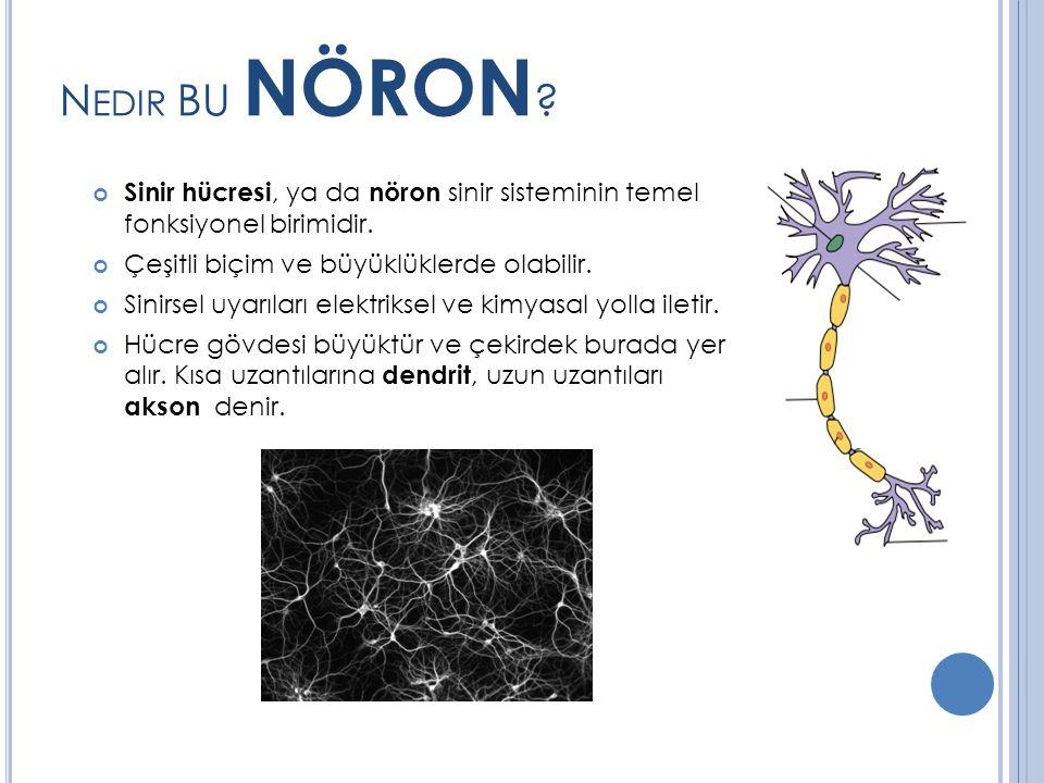 N EDIR BU NÖRON .Sinir hücresi, ya da nöron sinir sisteminin temel fonksiyonel birimidir.