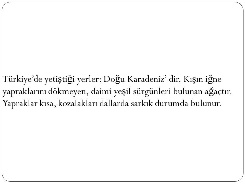 Türkiye'de yeti ş ti ğ i yerler: Do ğ u Karadeniz' dir. Kı ş ın i ğ ne yapraklarını dökmeyen, daimi ye ş il sürgünleri bulunan a ğ açtır. Yapraklar kı