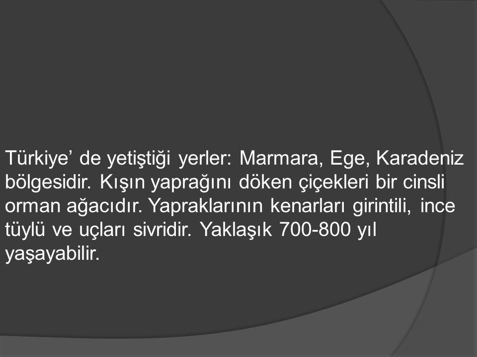 Türkiye' de yetiştiği yerler: Marmara, Ege, Karadeniz bölgesidir. Kışın yaprağını döken çiçekleri bir cinsli orman ağacıdır. Yapraklarının kenarları g