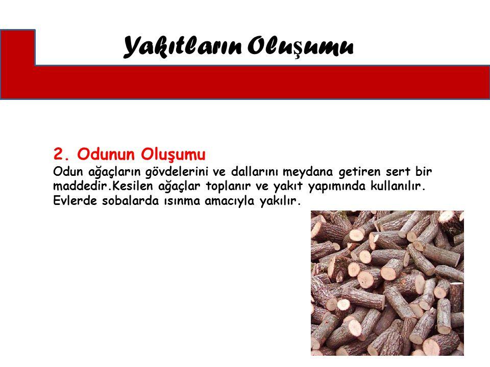2. Odunun Oluşumu Odun ağaçların gövdelerini ve dallarını meydana getiren sert bir maddedir.Kesilen ağaçlar toplanır ve yakıt yapımında kullanılır. Ev