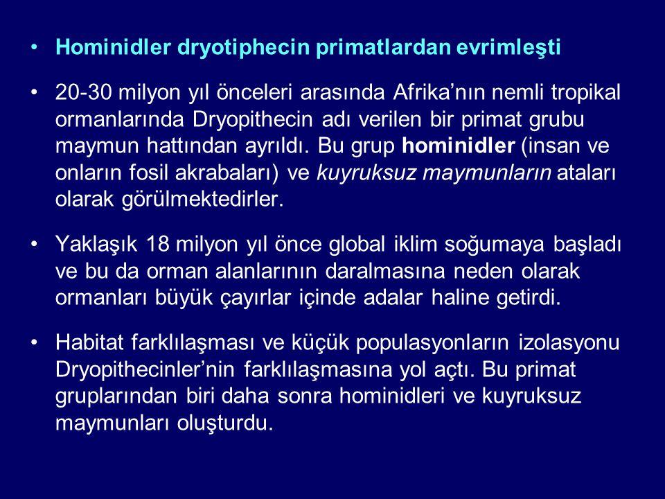 Hominidler dryotiphecin primatlardan evrimleşti 20-30 milyon yıl önceleri arasında Afrika'nın nemli tropikal ormanlarında Dryopithecin adı verilen bir