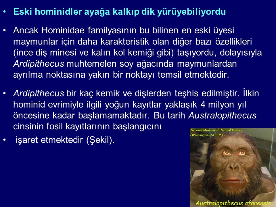 Eski hominidler ayağa kalkıp dik yürüyebiliyordu Ancak Hominidae familyasının bu bilinen en eski üyesi maymunlar için daha karakteristik olan diğer ba