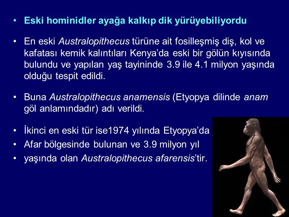 Eski hominidler ayağa kalkıp dik yürüyebiliyordu En eski Australopithecus türüne ait fosilleşmiş diş, kol ve kafatası kemik kalıntıları Kenya'da eski