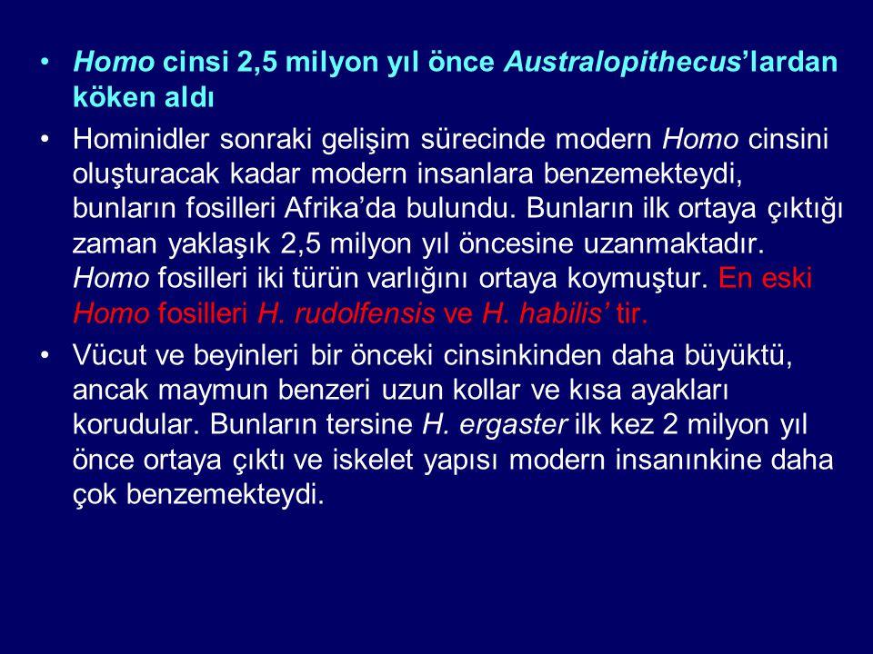 Homo cinsi 2,5 milyon yıl önce Australopithecus'lardan köken aldı Hominidler sonraki gelişim sürecinde modern Homo cinsini oluşturacak kadar modern in