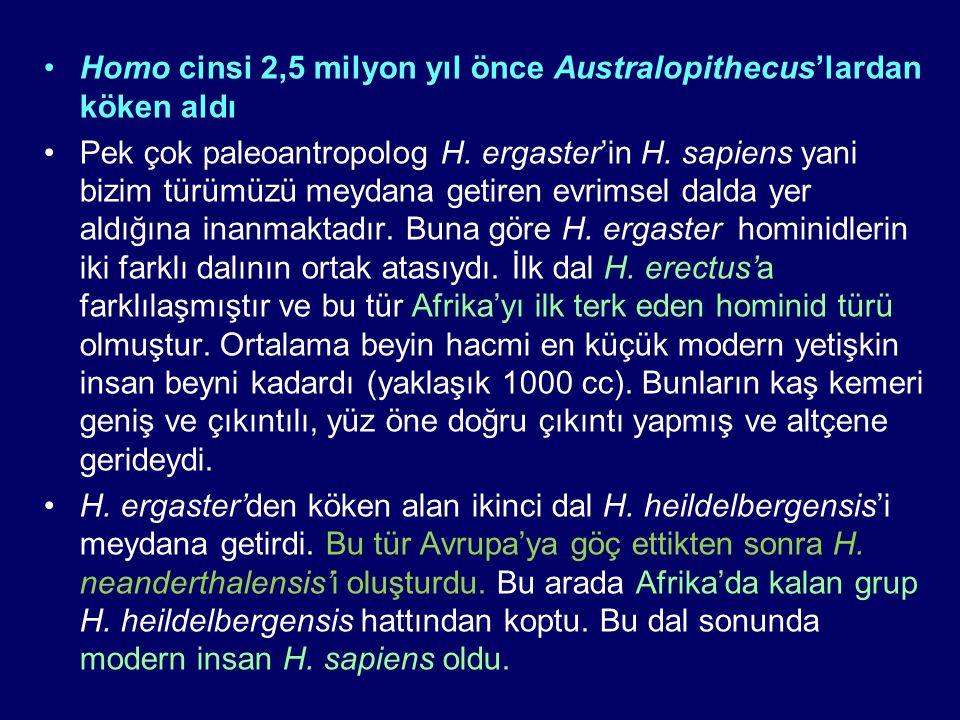 Homo cinsi 2,5 milyon yıl önce Australopithecus'lardan köken aldı Pek çok paleoantropolog H. ergaster'in H. sapiens yani bizim türümüzü meydana getire