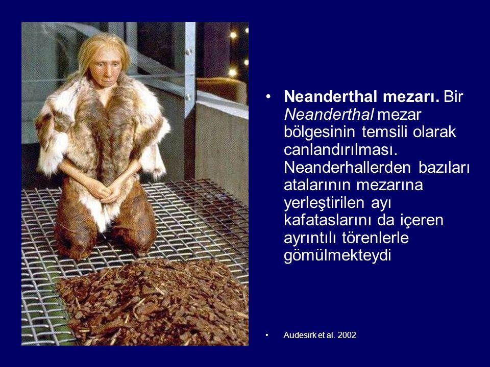 Neanderthal mezarı. Bir Neanderthal mezar bölgesinin temsili olarak canlandırılması. Neanderhallerden bazıları atalarının mezarına yerleştirilen ayı k