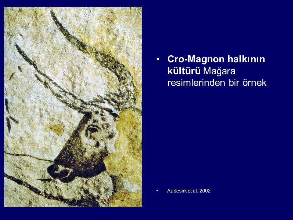Cro-Magnon halkının kültürü Mağara resimlerinden bir örnek Audesirk et al. 2002