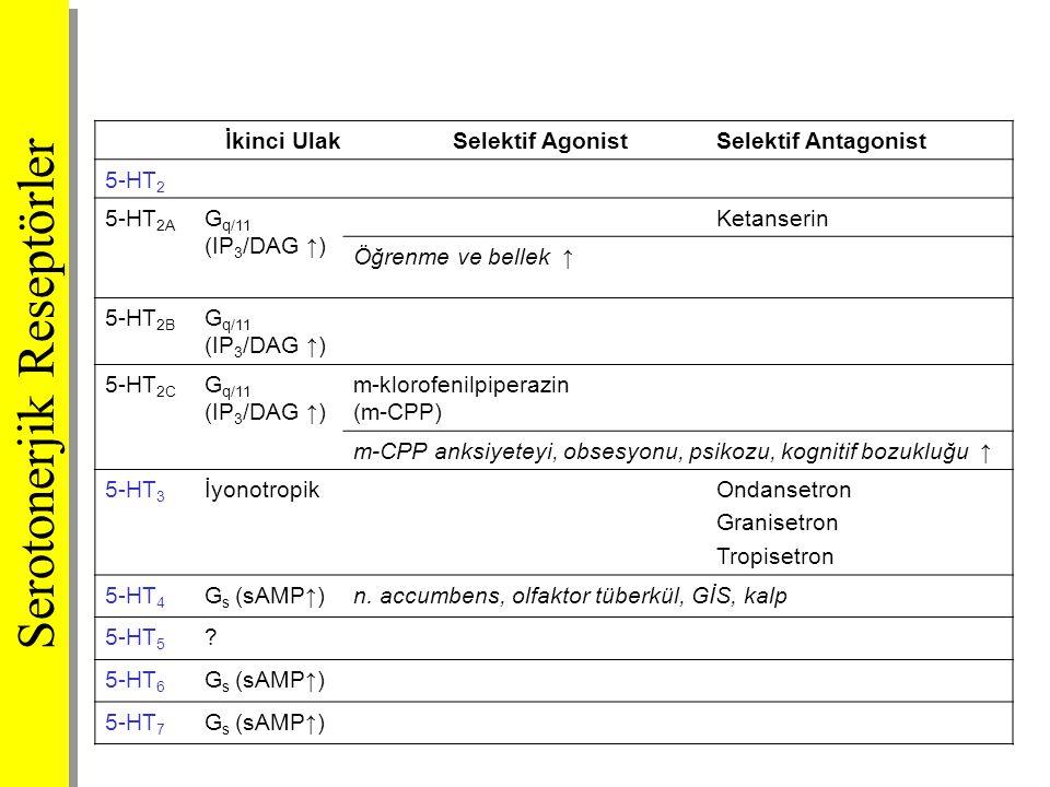 İkinci UlakSelektif AgonistSelektif Antagonist 5-HT 2 5-HT 2A G q/11 (IP 3 /DAG ↑) Ketanserin Öğrenme ve bellek ↑ 5-HT 2B G q/11 (IP 3 /DAG ↑) 5-HT 2C