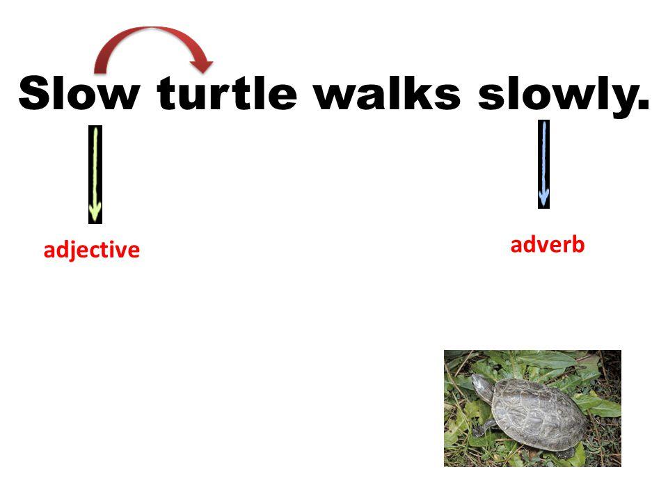 Slow turtle walks slowly. adjective adverb