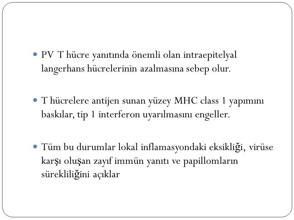 PV T hücre yanıtında önemli olan intraepitelyal langerhans hücrelerinin azalmasına sebep olur. T hücrelere antijen sunan yüzey MHC class 1 yapımını ba