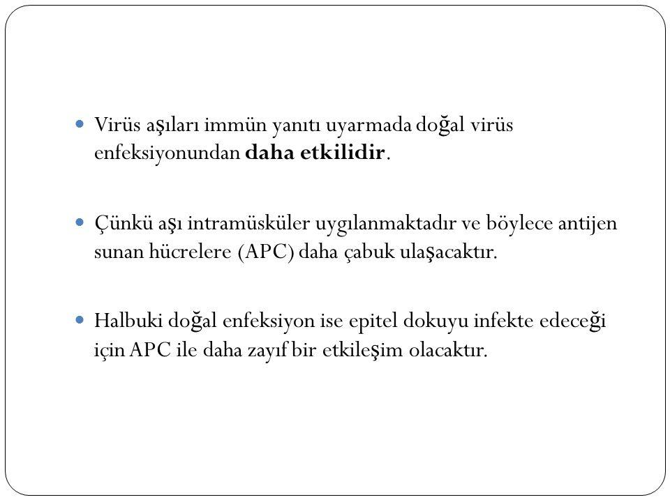 Virüs a ş ıları immün yanıtı uyarmada do ğ al virüs enfeksiyonundan daha etkilidir. Çünkü a ş ı intramüsküler uygılanmaktadır ve böylece antijen sunan