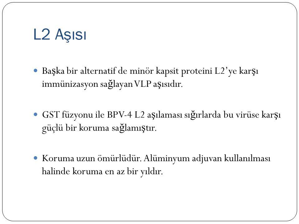 L2 Aşısı Ba ş ka bir alternatif de minör kapsit proteini L2'ye kar ş ı immünizasyon sa ğ layan VLP a ş ısıdır.