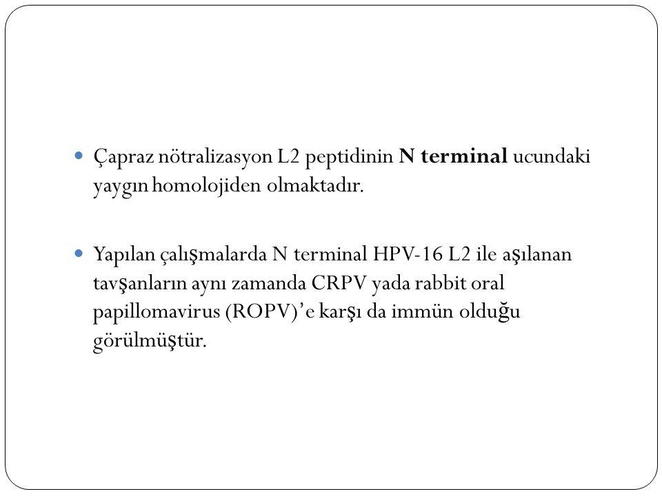 Çapraz nötralizasyon L2 peptidinin N terminal ucundaki yaygın homolojiden olmaktadır. Yapılan çalı ş malarda N terminal HPV-16 L2 ile a ş ılanan tav ş