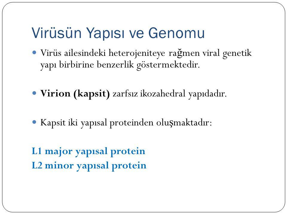 Virüsün Yapısı ve Genomu Virüs ailesindeki heterojeniteye ra ğ men viral genetik yapı birbirine benzerlik göstermektedir.