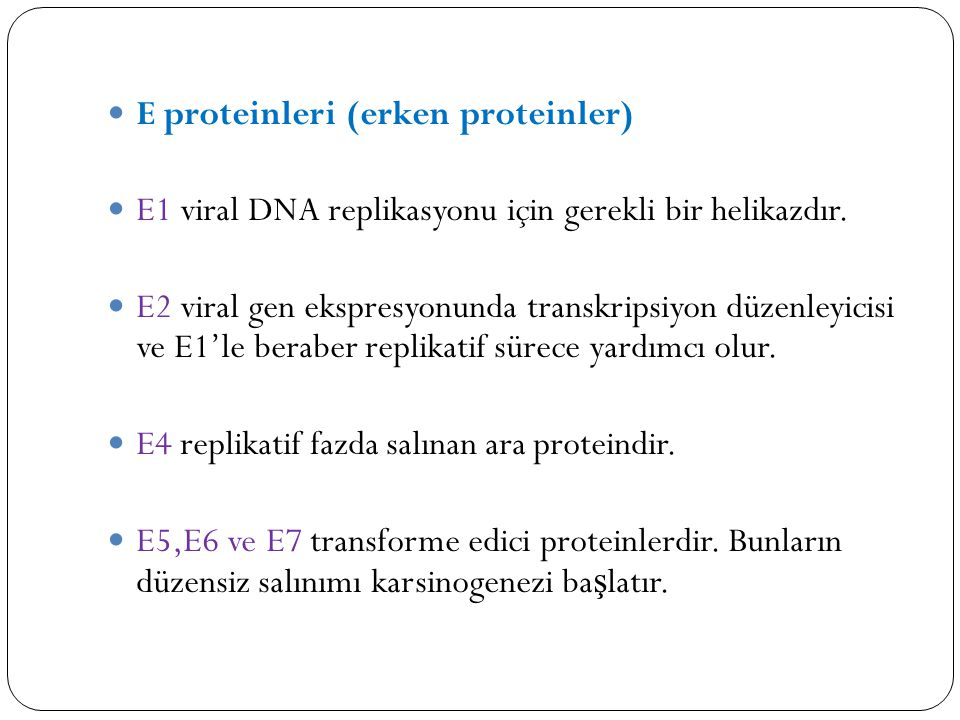 E proteinleri (erken proteinler) E1 viral DNA replikasyonu için gerekli bir helikazdır. E2 viral gen ekspresyonunda transkripsiyon düzenleyicisi ve E1