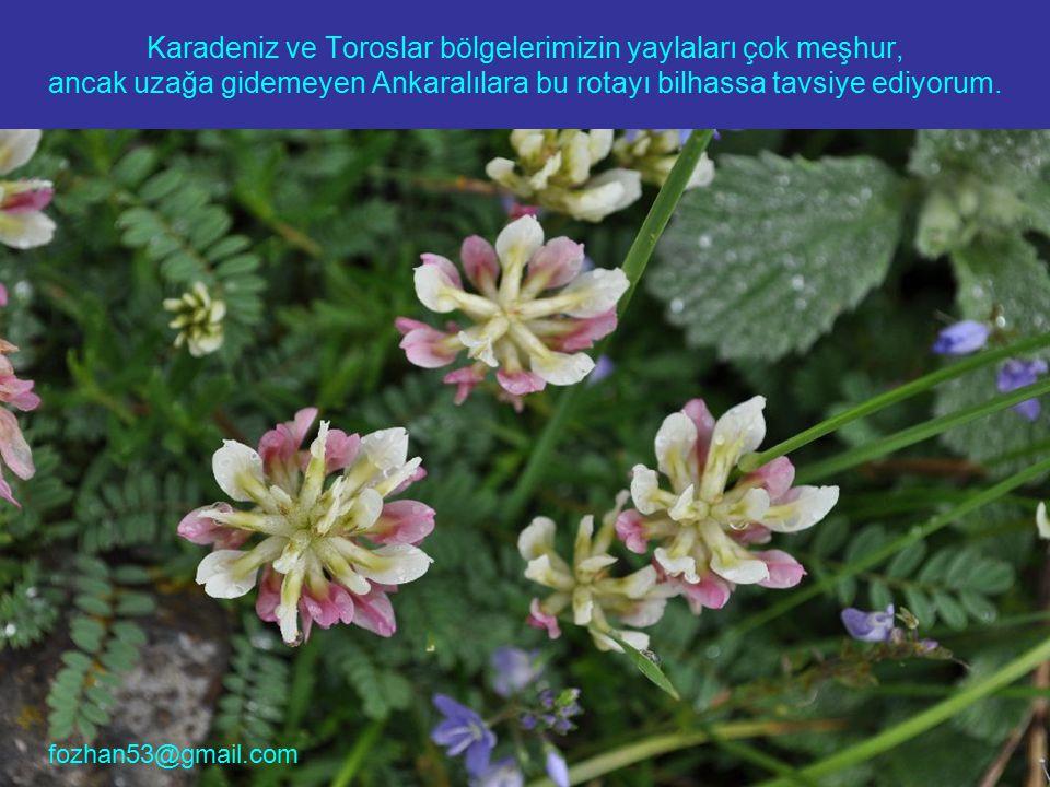 Karadeniz ve Toroslar bölgelerimizin yaylaları çok meşhur, ancak uzağa gidemeyen Ankaralılara bu rotayı bilhassa tavsiye ediyorum. fozhan53@gmail.com