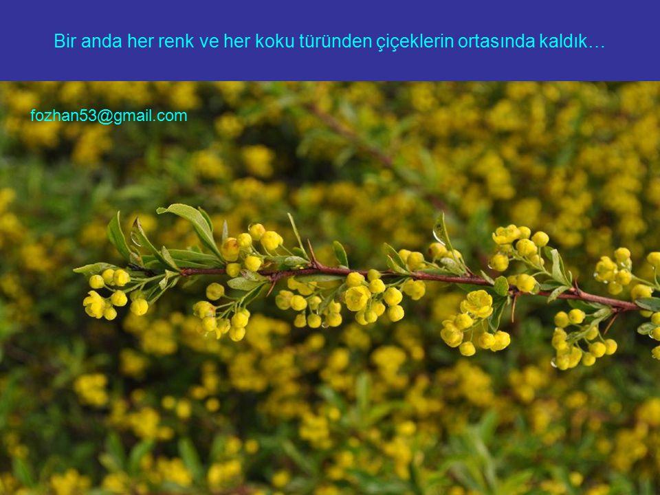 Bir anda her renk ve her koku türünden çiçeklerin ortasında kaldık… fozhan53@gmail.com