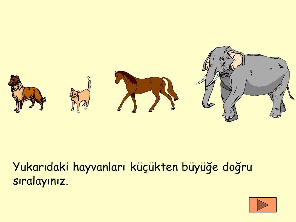 Yukarıdaki hayvanları küçükten büyüğe doğru sıralayınız.