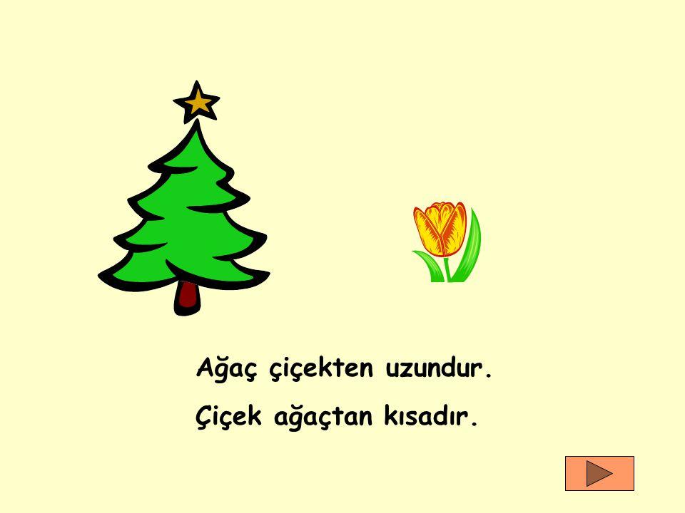 Ağaç çiçekten uzundur. Çiçek ağaçtan kısadır.