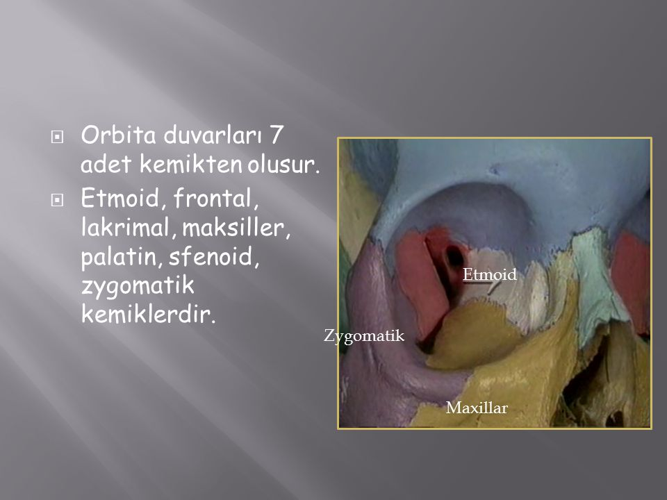  Orbita duvarları 7 adet kemikten olusur.  Etmoid, frontal, lakrimal, maksiller, palatin, sfenoid, zygomatik kemiklerdir. Maxillar Zygomatik Etmoid