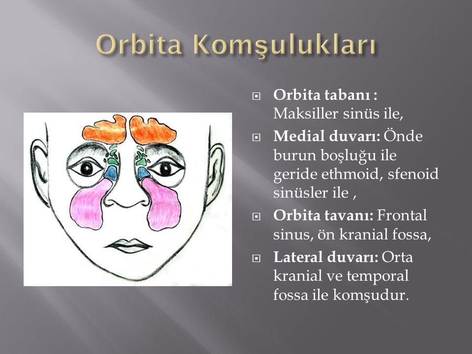  Orbita tabanı : Maksiller sinüs ile,  Medial duvarı: Önde burun boşluğu ile geride ethmoid, sfenoid sinüsler ile,  Orbita tavanı: Frontal sinus, ö