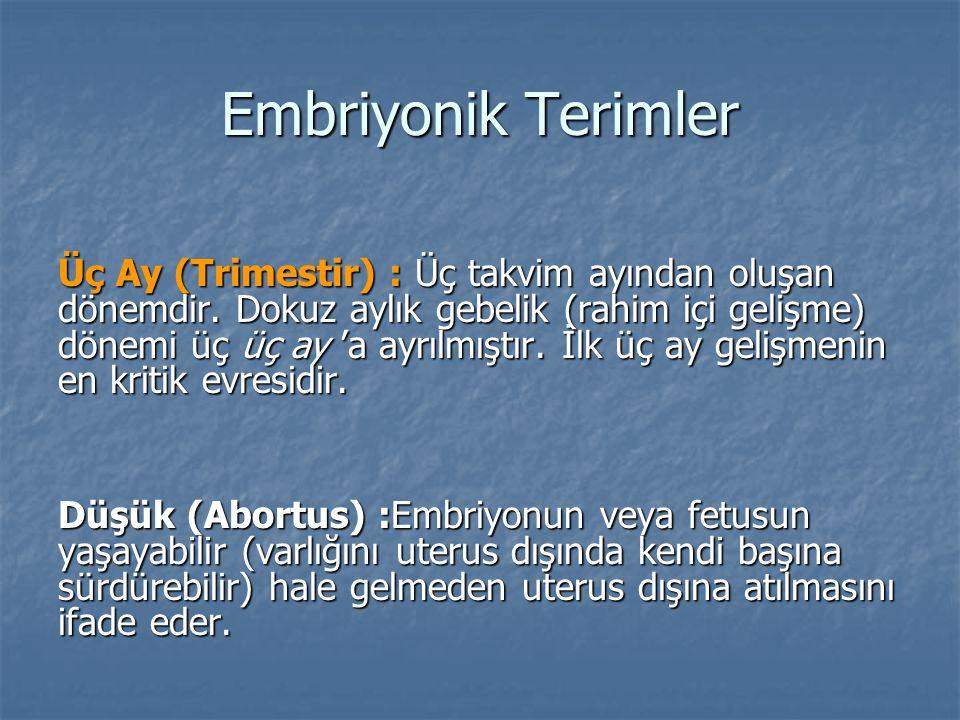 Embriyonik Terimler Üç Ay (Trimestir) : Üç takvim ayından oluşan dönemdir. Dokuz aylık gebelik (rahim içi gelişme) dönemi üç üç ay 'a ayrılmıştır. İlk