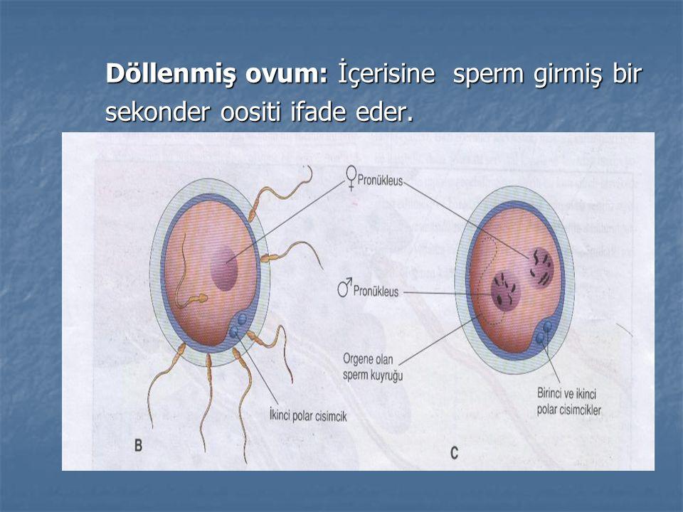 Döllenmiş ovum: İçerisine sperm girmiş bir Döllenmiş ovum: İçerisine sperm girmiş bir sekonder oositi ifade eder. sekonder oositi ifade eder.