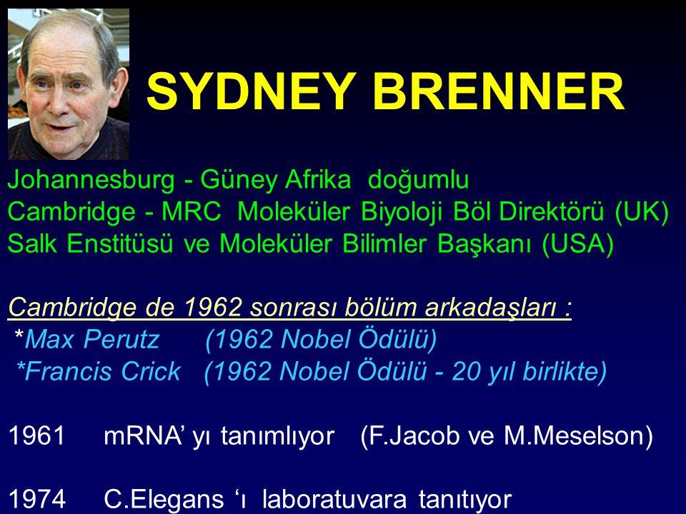 SYDNEY BRENNER Johannesburg - Güney Afrika doğumlu Cambridge - MRC Moleküler Biyoloji Böl Direktörü (UK) Salk Enstitüsü ve Moleküler Bilimler Başkanı (USA) Cambridge de 1962 sonrası bölüm arkadaşları : *Max Perutz (1962 Nobel Ödülü) *Francis Crick (1962 Nobel Ödülü - 20 yıl birlikte) 1961 mRNA' yı tanımlıyor (F.Jacob ve M.Meselson) 1974 C.Elegans 'ı laboratuvara tanıtıyor