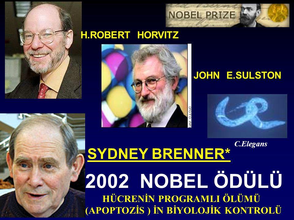 H.ROBERT HORVITZ JOHN E.SULSTON SYDNEY BRENNER* 2002 NOBEL ÖDÜLÜ HÜCRENİN PROGRAMLI ÖLÜMÜ (APOPTOZİS ) İN BİYOLOJİK KONTROLÜ C.Elegans
